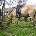 我在Terelj騎的馬