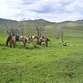 Terelj的草原