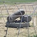 Kharkhorin的陽具石
