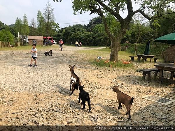 鹿羽松牧場_200419_0040.jpg