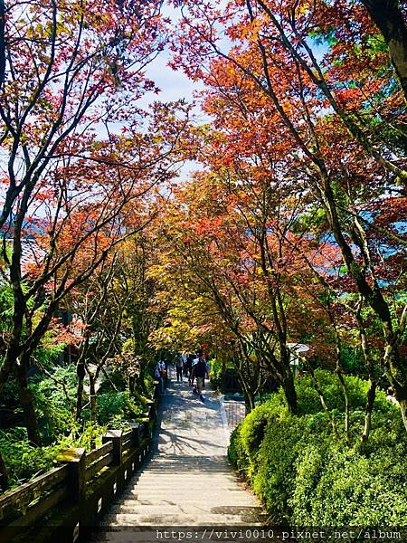 太平山_200925_71.jpg