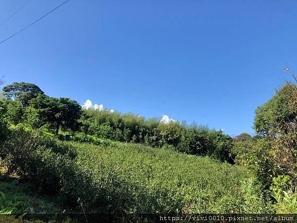 茶山步道_201005_3.jpg