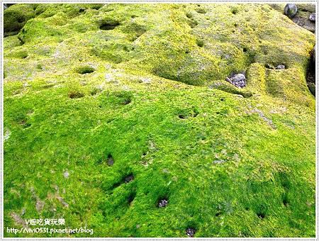 綠地毯.JPG