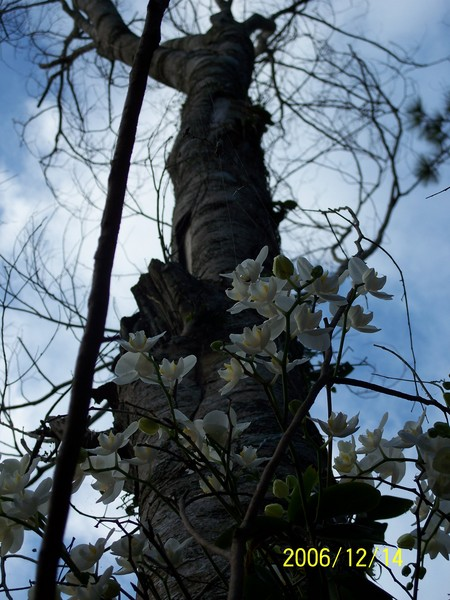 20061214知本森林公園_000.jpg