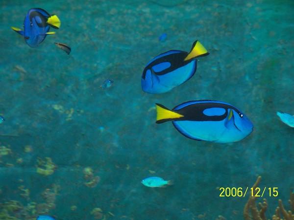 20061215屏東海洋博物館.jpg