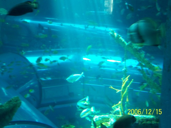 20061215屏東海洋博物館_001.jpg