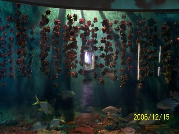20061215屏東海洋博物館_004.jpg