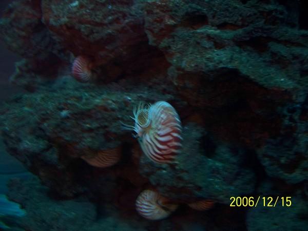 20061215屏東海洋博物館_005.jpg