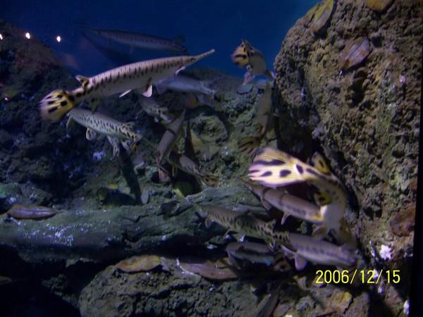 20061215屏東海洋博物館_006.jpg