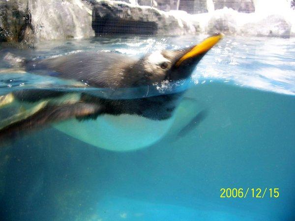 20061215屏東海洋博物館可愛的企鵝.jpg