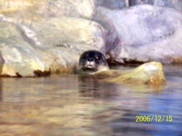 20061215屏東海洋博物館可愛的海豹_006.jpg