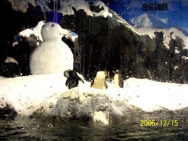 20061215屏東海洋博物館可愛的企鵝_000.jpg