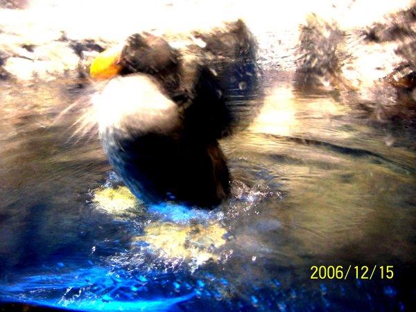 20061215屏東海洋博物館_008.jpg