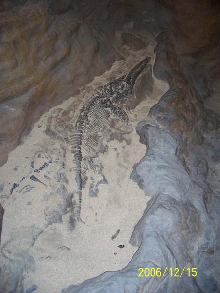 20061215屏東海洋博物館化石.jpg