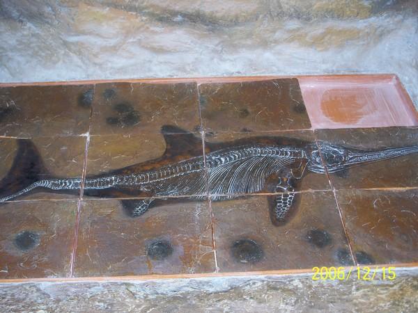 20061215屏東海洋博物館化石_000.jpg
