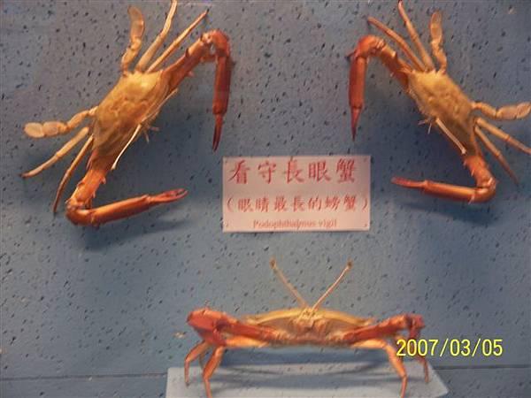 拍攝於澎湖竹灣螃蟹博物館_000.jpg