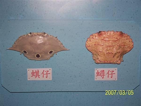 拍攝於澎湖竹灣螃蟹博物館.jpg