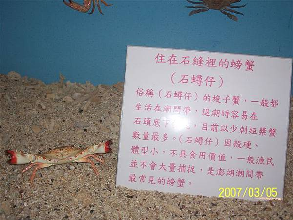 拍攝於澎湖竹灣螃蟹博物館_014.jpg