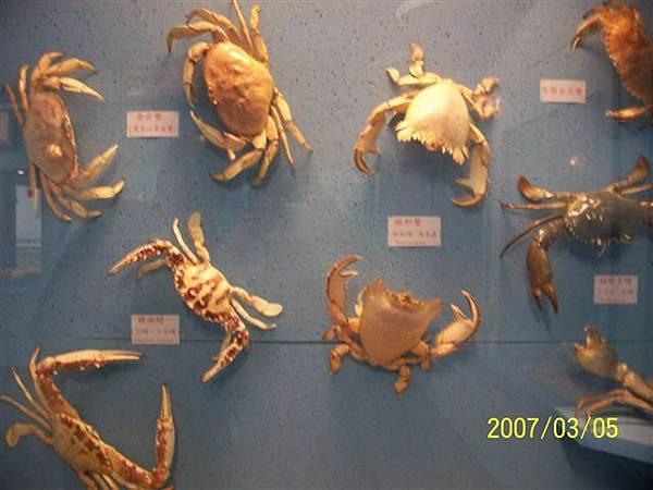 拍攝於竹灣螃蟹博物館.jpg