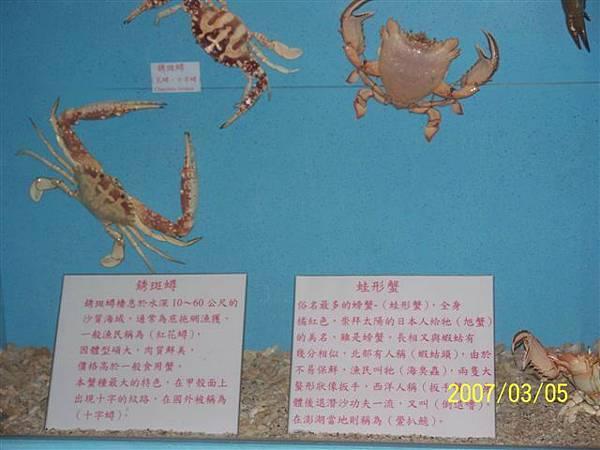 拍攝於竹灣螃蟹博物館_001.jpg