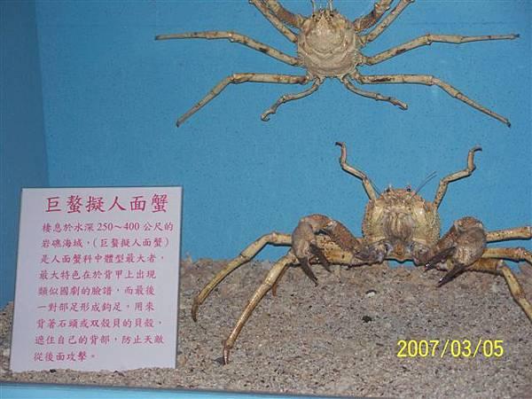 拍攝於澎湖竹灣螃蟹博物館_002.jpg