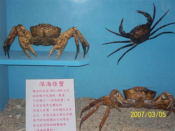 拍攝於竹灣螃蟹博物館_000.jpg