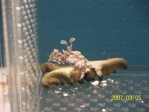 拍攝於澎湖竹灣螃蟹博物館_026.jpg