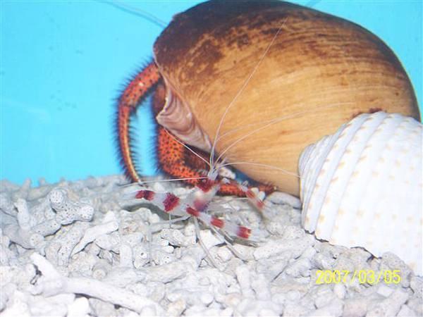 拍攝於竹灣螃蟹博物館_025.jpg