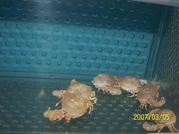 拍攝於澎湖竹灣螃蟹博物館_027.jpg