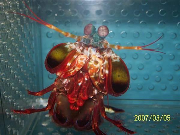 拍攝於竹灣螃蟹博物館_020.jpg