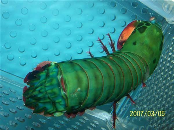 拍攝於澎湖竹灣螃蟹博物館_021.jpg