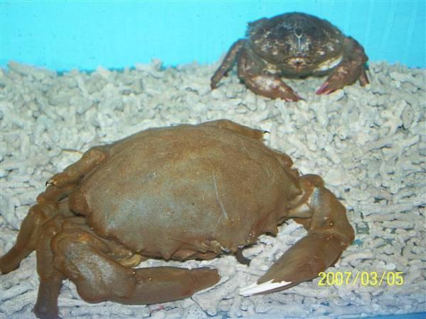 拍攝於澎湖竹灣螃蟹博物館_025.jpg