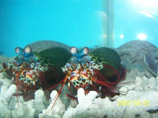 拍攝於澎湖竹灣螃蟹博物館_022.jpg