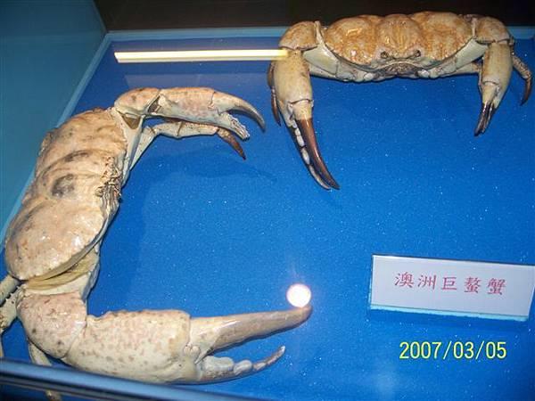 拍攝於澎湖竹灣螃蟹博物館_005.jpg