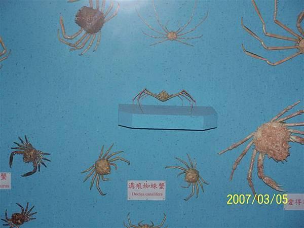 拍攝於竹灣螃蟹博物館_005.jpg