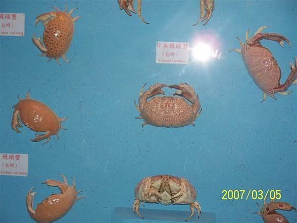 拍攝於澎湖竹灣螃蟹博物館_006.jpg