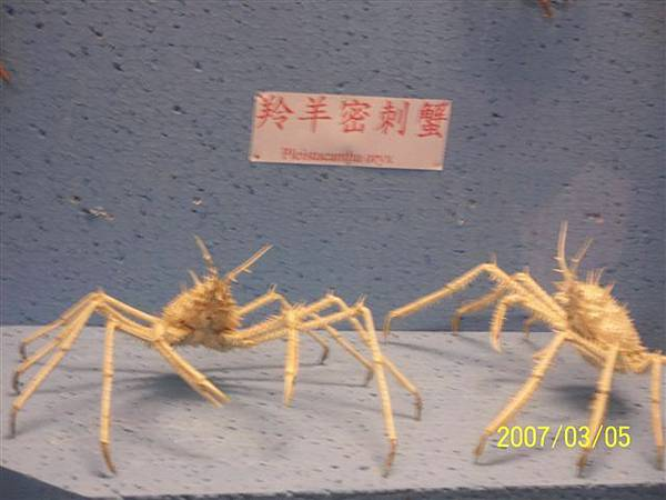 拍攝於竹灣螃蟹博物館_003.jpg