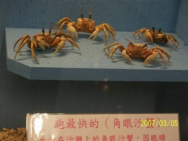 拍攝於澎湖竹灣螃蟹博物館_008.jpg