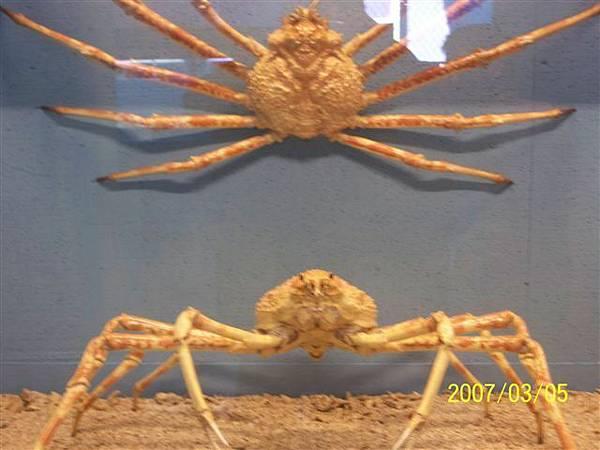拍攝於竹灣螃蟹博物館_007.jpg