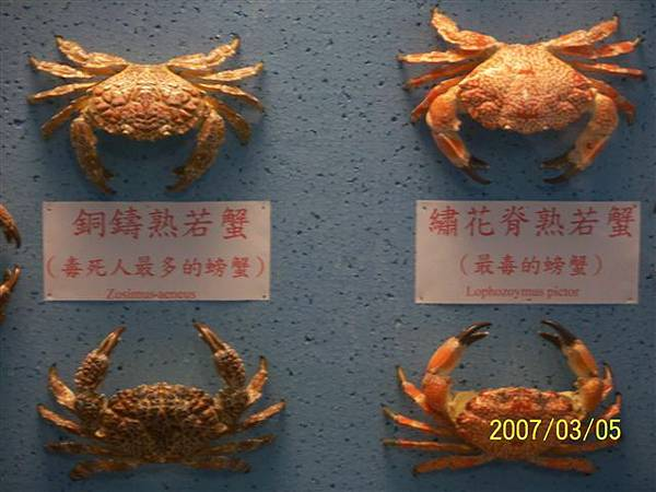 拍攝於竹灣螃蟹博物館_008.jpg