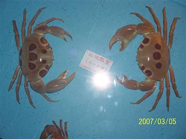 拍攝於澎湖竹灣螃蟹博物館_010.jpg