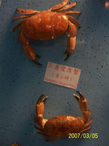 拍攝於竹灣螃蟹博物館_010.jpg