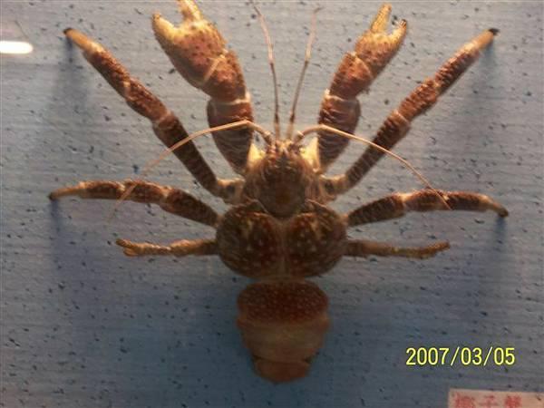 拍攝於澎湖竹灣螃蟹博物館_011.jpg