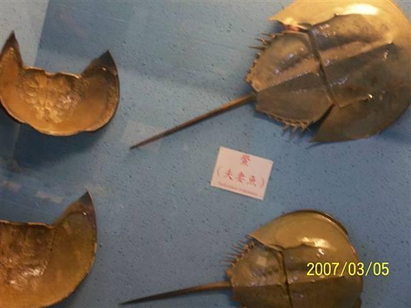 拍攝於竹灣螃蟹博物館_009.jpg