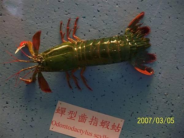 拍攝於澎湖竹灣螃蟹博物館_013.jpg
