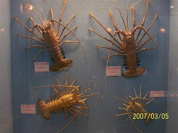 拍攝於竹灣螃蟹博物館_014.jpg