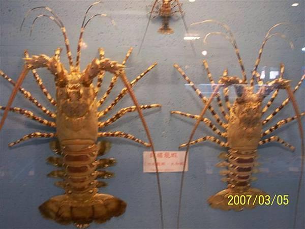 拍攝於竹灣螃蟹博物館_012.jpg