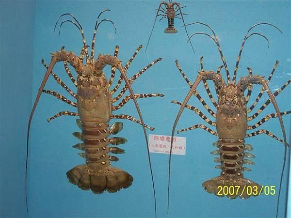 拍攝於竹灣螃蟹博物館_013.jpg