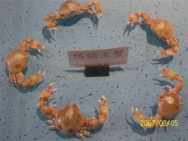 拍攝於竹灣螃蟹博物館_016.jpg