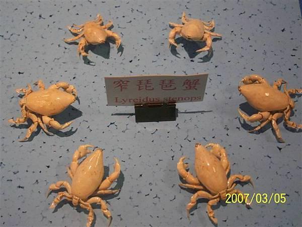 拍攝於竹灣螃蟹博物館_015.jpg
